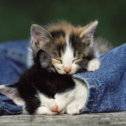 Gatos-durmiendo-920998