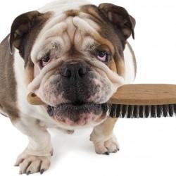 como-cepillar-a-un-perro-de-pelo-corto
