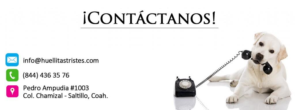 contacto2