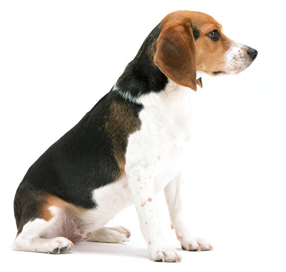 perro corto