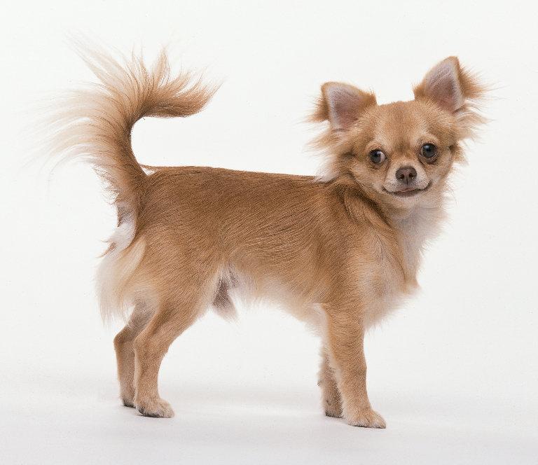 perro medio