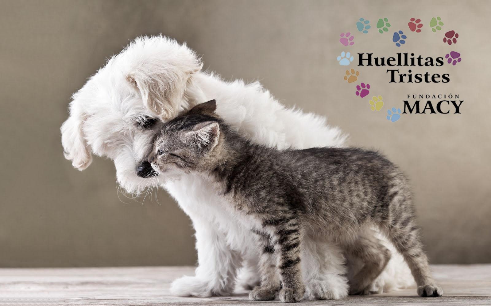 Los Gatos Y Perros Pueden Ser Amigos! Descubre Cómo