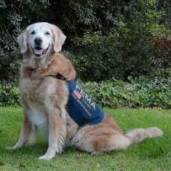 Bretagne perro héroe de rescate 9/11