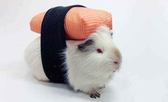 Disfraces de mascotas