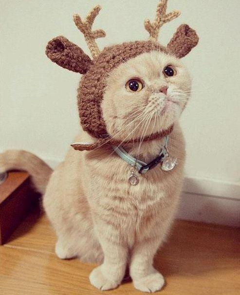 A Cat Wearing A Reindeer Costume
