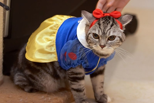 halloween-inspiration-cats-costume--large-msg-131898704193